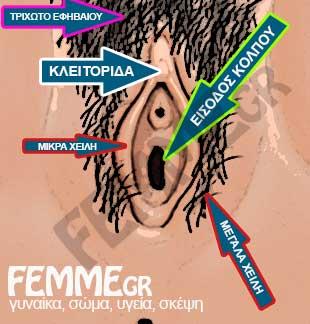 εξωτερικά γεννητικά όργανα, αιδοίο, κλειτορίδα, χείλη και είσοδος κόλπου